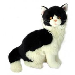 Black and White Cat Angus by Bocchetta