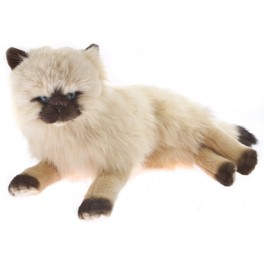 Himalayan Plush Toy Cat Violet by Bocchetta Plush Toys