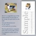 Australian Shepherd List pad