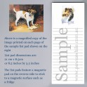 Jack Russell Terrier List Pad