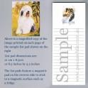 Old English Sheepdog List Pad