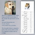 Yellow Labrador List Pad