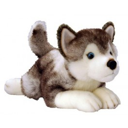 Siberian Husky  Plush Dog Storm  by Keel Toys 50cm