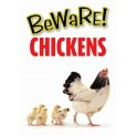 BEWARE CHICKENS warning sign - indoor or outdoor