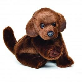 Chocolate Labrador Small