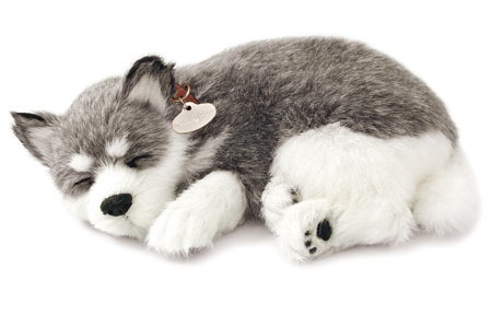 Alaskan Malamute Sleeping Plush Toy. Alaskan Malamute. Dogs. Paws A While .